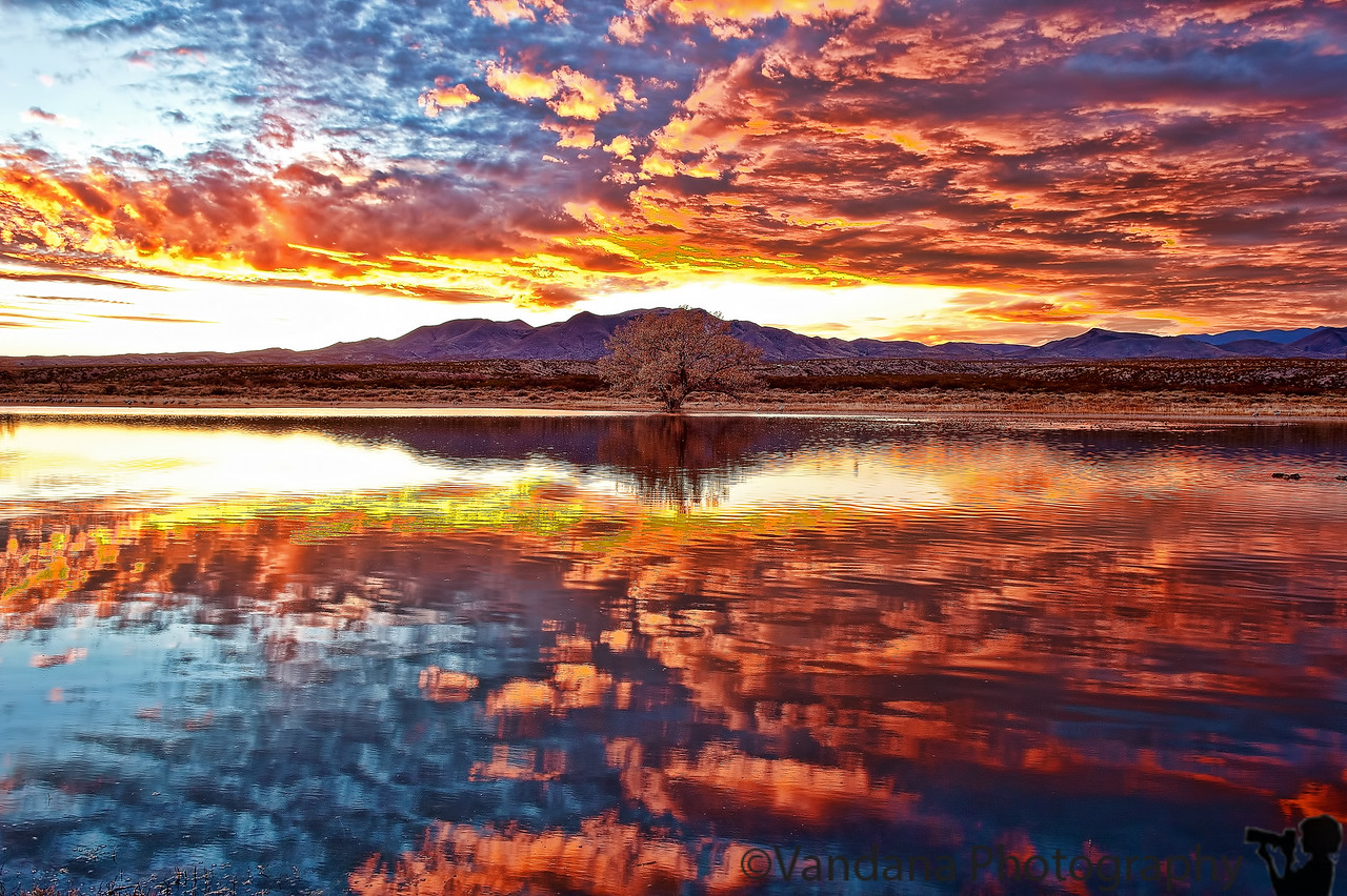 Jan 25, 2011 - sunset at Bosque del apache NWR, NM  Back in Illinois to 20F, processing some Bosque shots !