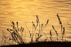 March 19, 2011- silhouettes at sunset