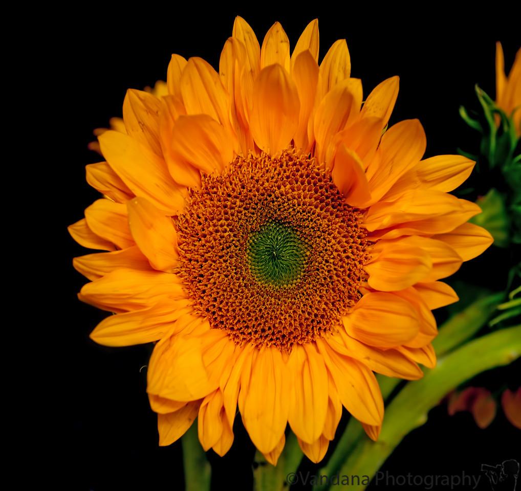 September 26, 2011 - let the sun shine !