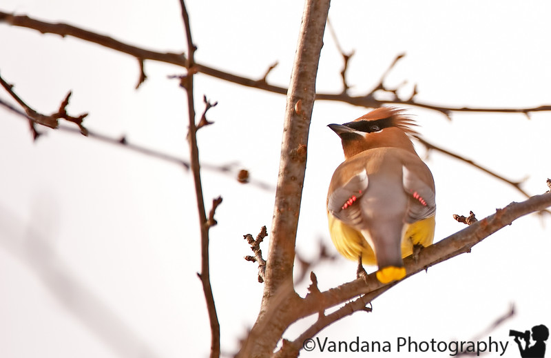 Feb 15, 2011 - Signs of spring and the birds come home !