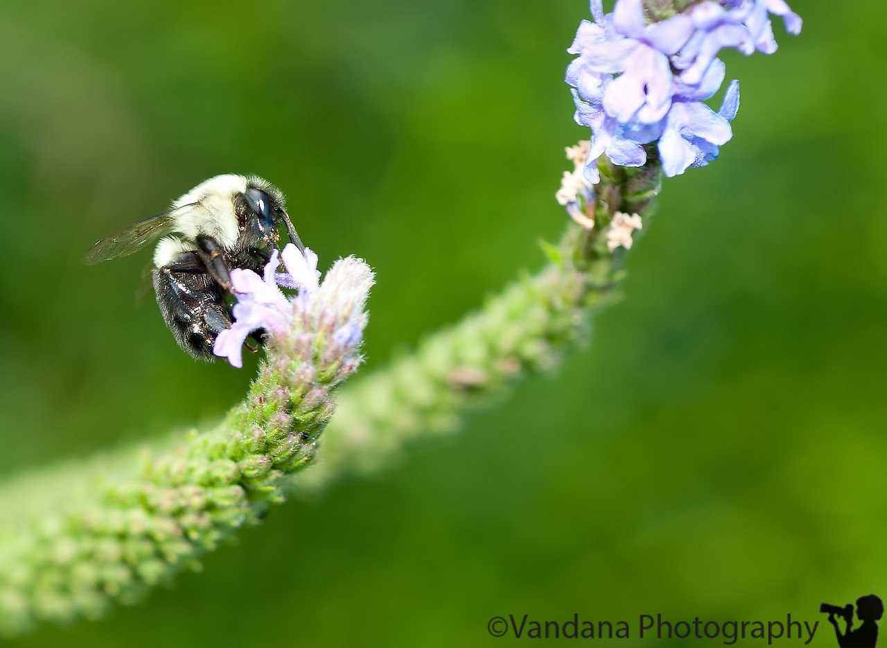 August 22, 2011 - Bee-time