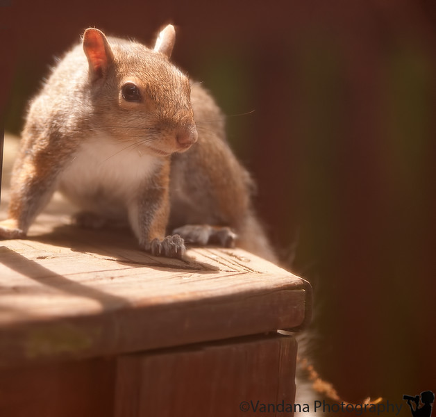 June 21, 2011 - squirrel on the prowl