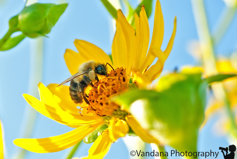 August 23, 2011 - just bee-ing