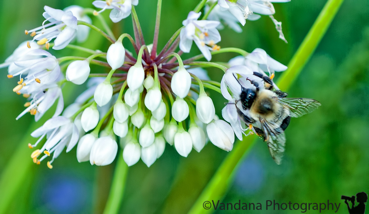 August 15, 2011 - bee time