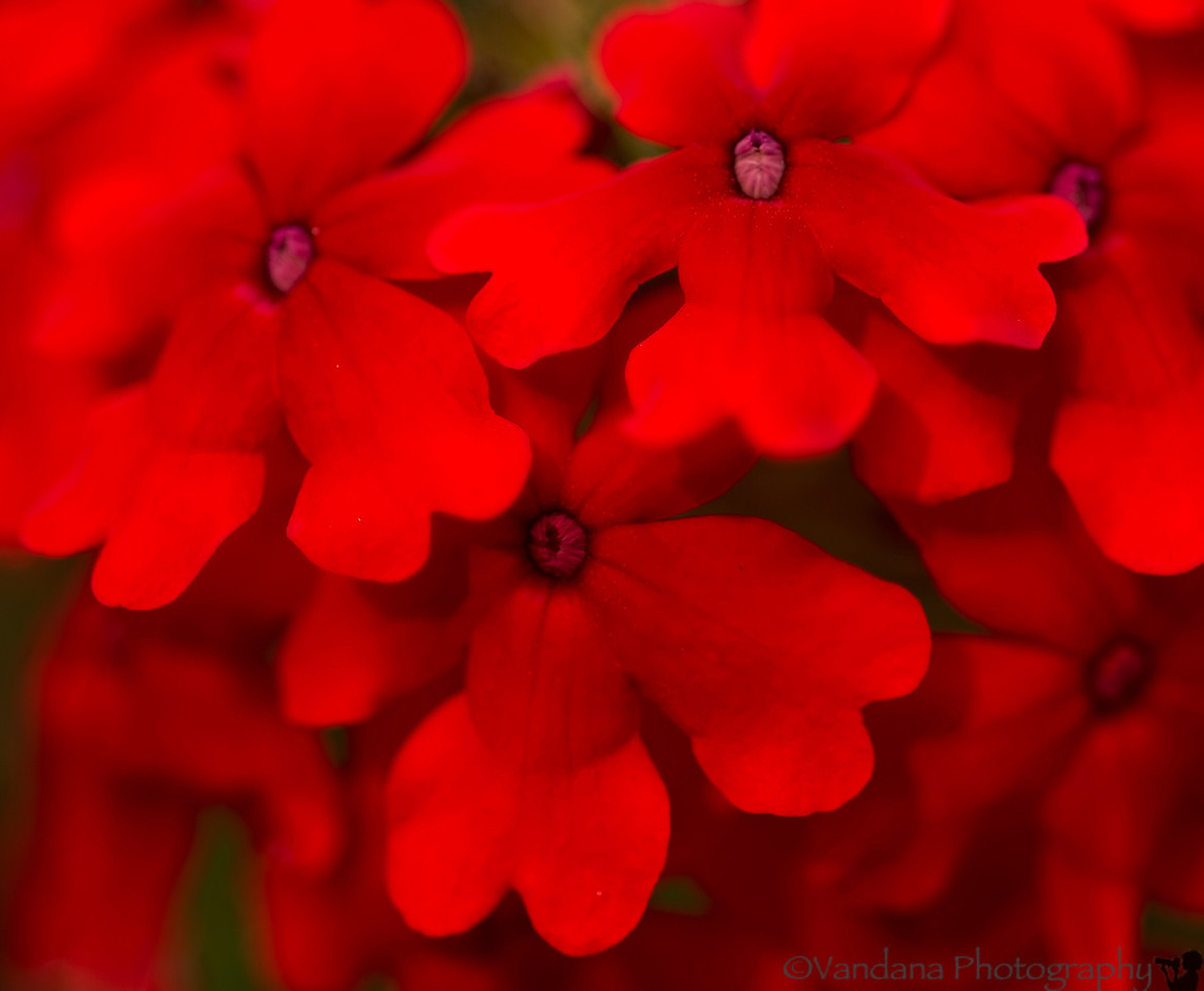 June 23, 2012 - Red<br /> <br /> thank you all for your comments and likes ! much appreciated. I'm sorry I havent been able to browse thru your dailies and comment/like, but hope to do so soon !