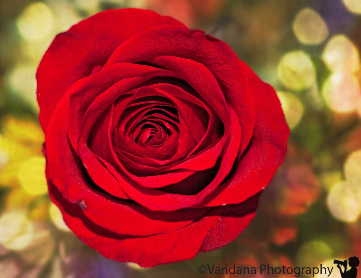 February 13, 2012 - Run up to Valentine's day. <br /> <br /> Happy Valentine's day !
