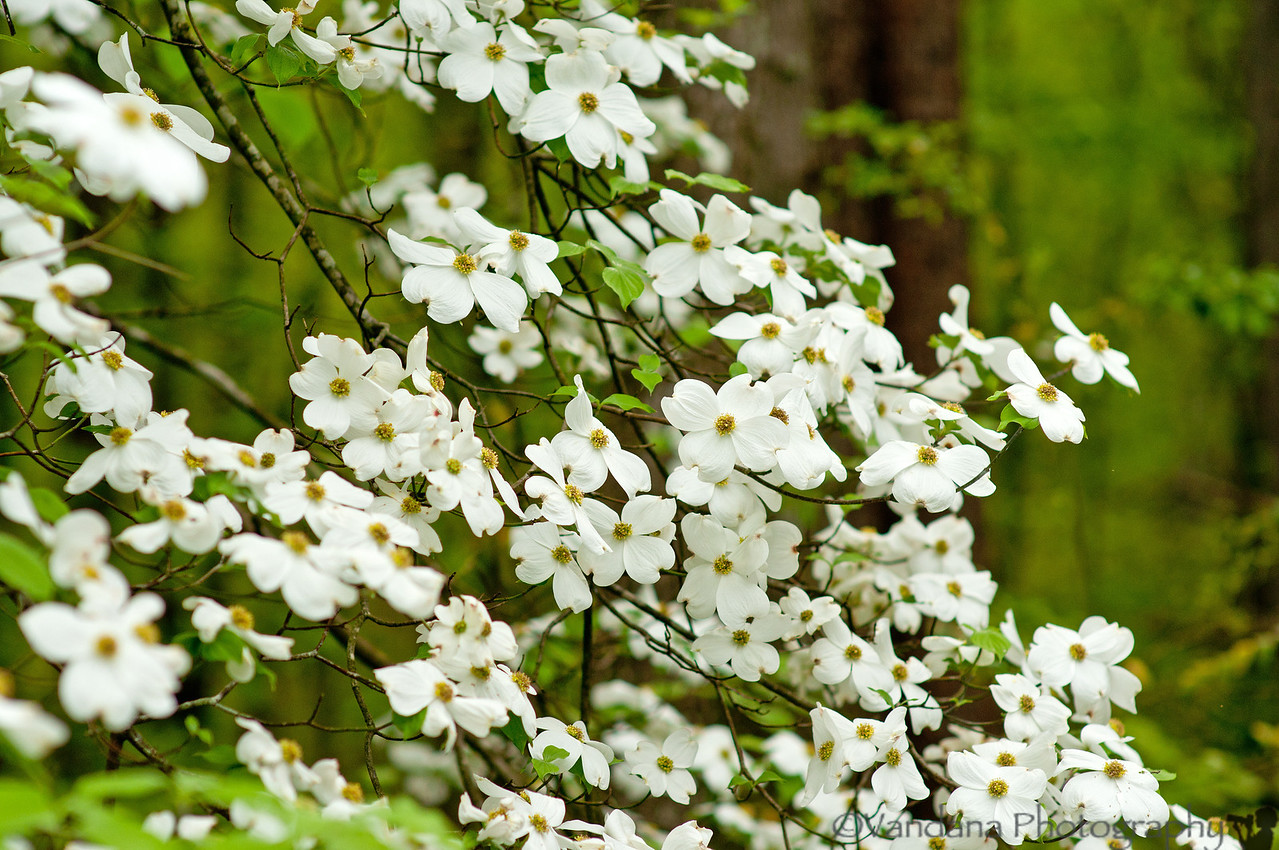 April 14, 2012 - Stop and smell the flowers