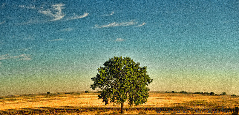 September 14, 2012 - the lone tree