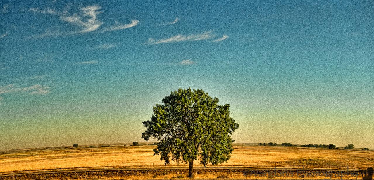 September 14, 2012 - the lone tree