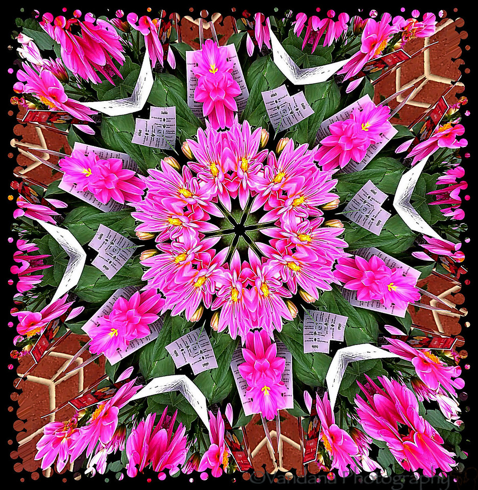 March 25, 2012 - Dahlia kaleidoscope<br /> <br /> taken and processed on iphone 4.