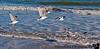 February 2, 2012 - Seagulls at the beach