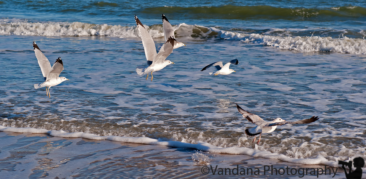 February 2, 2012 - Seagulls at the beach