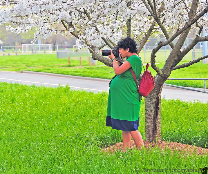 March 17, 2012 - A very pregnant click !   V, 35+ weeks pregnant, shooting spring blossoms in Freedom Park on St.Patrick's day. a beautiful, warm, 80F spring !