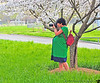 March 17, 2012 - A very pregnant click ! <br /> <br /> V, 35+ weeks pregnant, shooting spring blossoms in Freedom Park on St.Patrick's day. a beautiful, warm, 80F spring !
