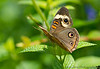 May 29, 2012 - another day, another butterfly ! <br /> <br /> thanks for your comments on my b-fly yesterday ! much appreciated