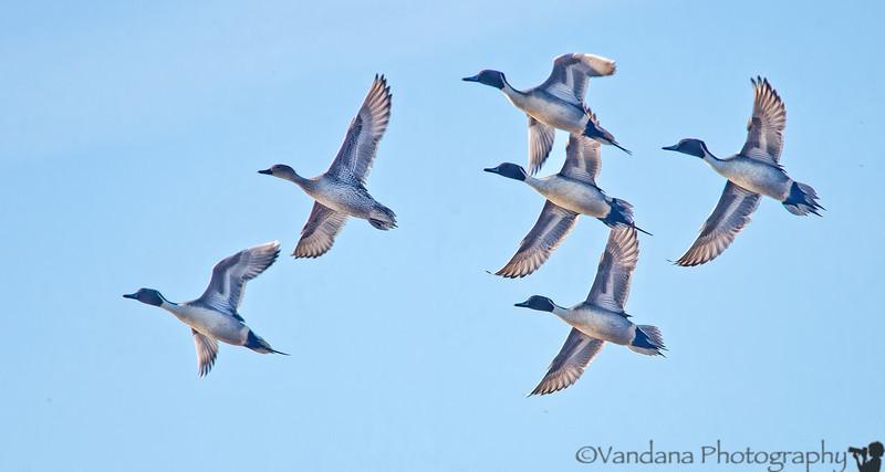 December 3, 2012 - Free as a bird..