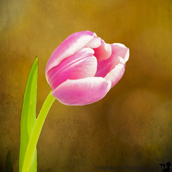 January 27, 2012 - Tulip time<br /> <br /> more texture action as well !