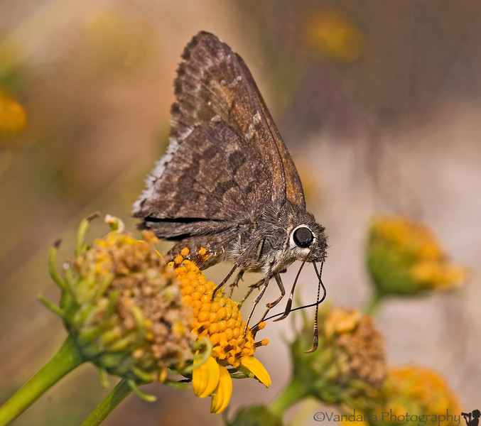 June 28, 2012 - Skipper on the flower<br /> <br /> uploading late dailies today..no laptop or wireless on the trip..