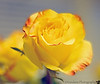 October 3, 2012 - Bright and yellow