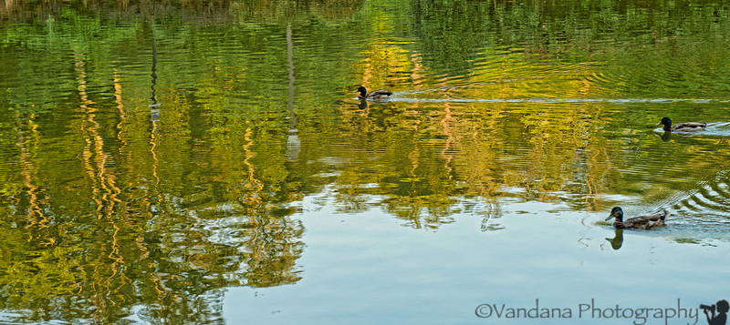 June 20, 2012 - reflections