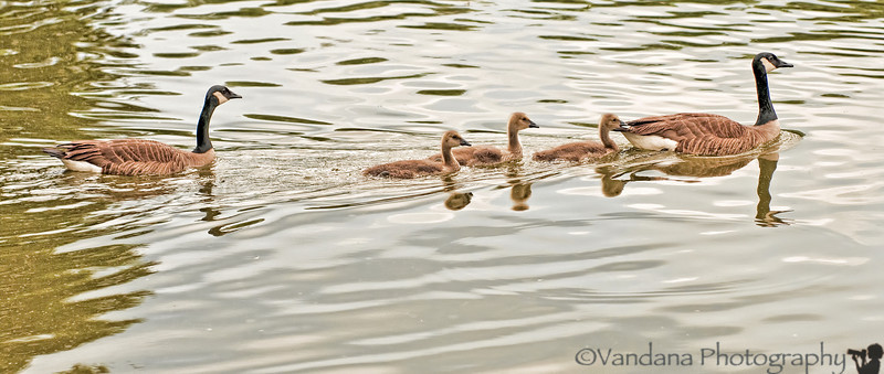 May 19, 2012 - babies of a different kind !