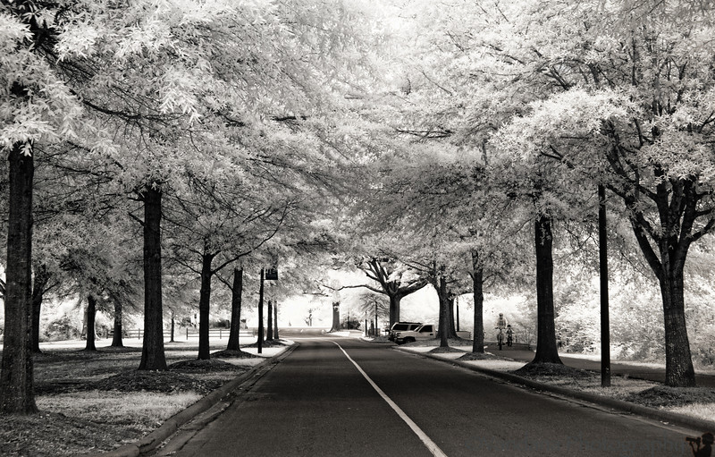 June 24, 2012 - The woods are lovely, dark and deep..in IR
