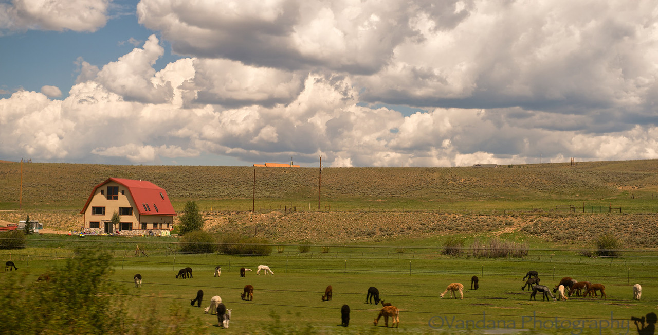 August 7, 2012 - a pastoral scene