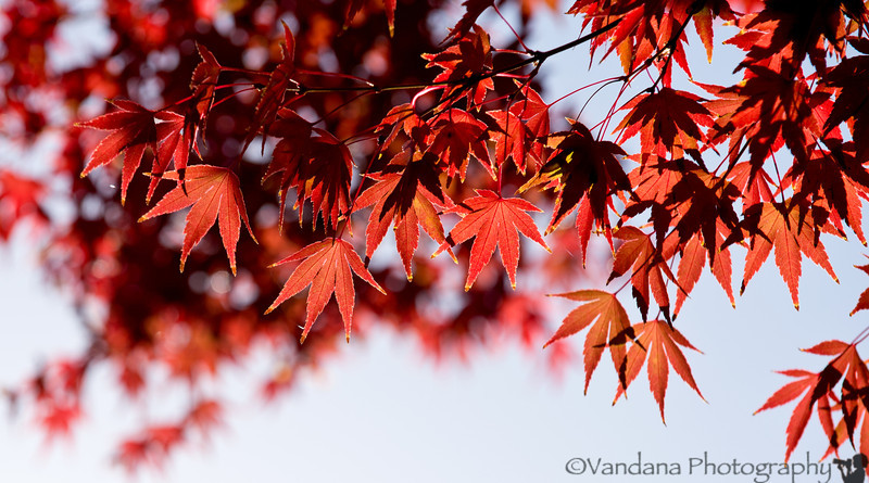 November 16, 2012 - Colors of fall