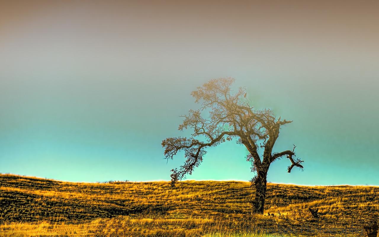 December 11, 2012 - The lone tree
