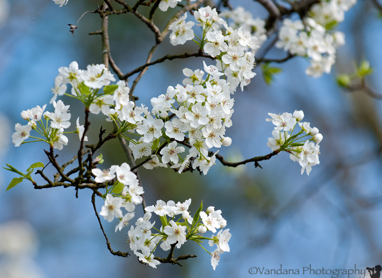 March 5, 2012 - Spring is near..spring is Here !!