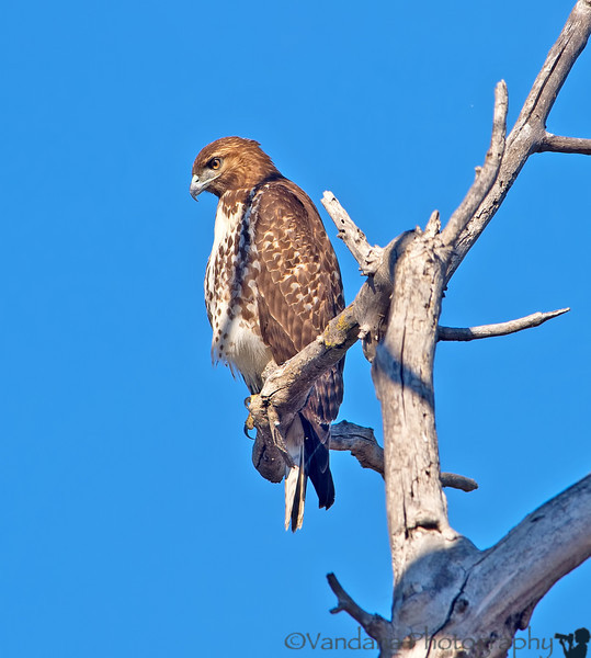 November 25, 2012 - A hawk(ish) view