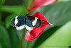 June 3, 2012 - Warmed by the heart <br /> so many butterflies, but such variety..I hope you don't mind ;)