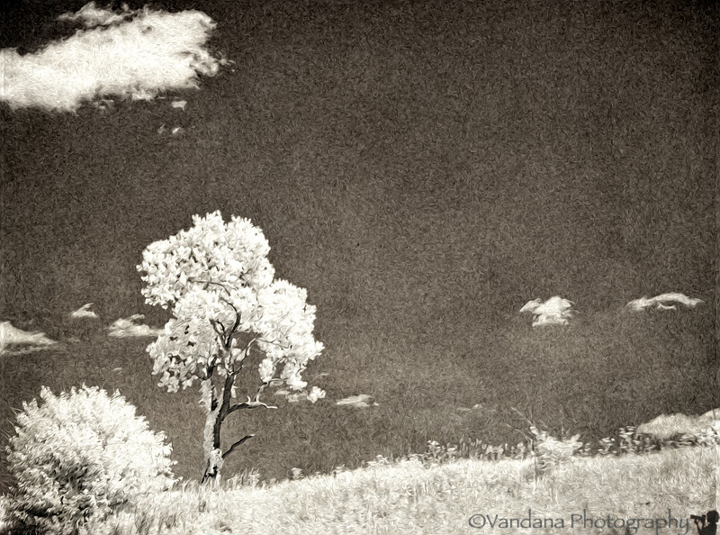 March 3, 2012 - Lone tree ( in IR)
