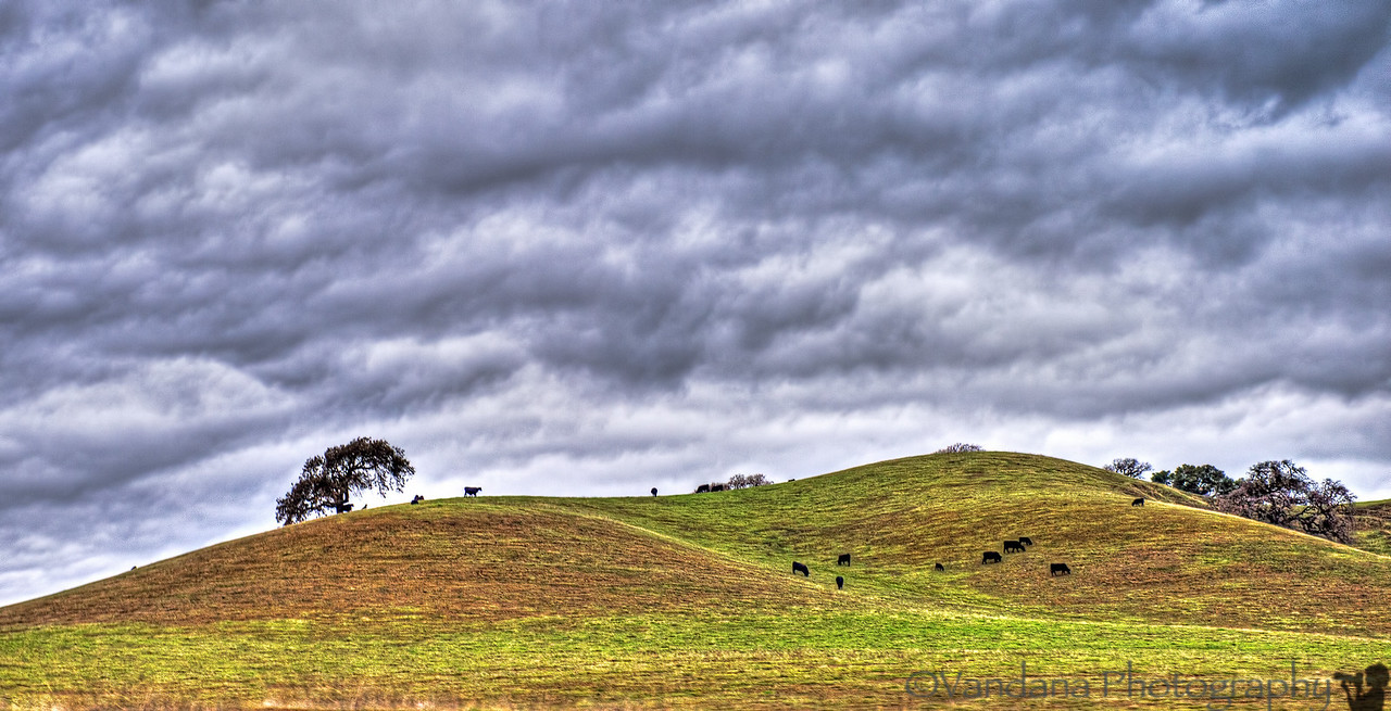 December 30, 2012 - In the storm, taken near Pleasonton, CA
