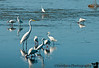 January 6, 2012 - Birds, birds,... at Ding Darling NWR