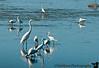 January 6, 2012 - Birds, birds,... at Ding Darling NWR
