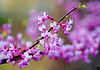 March 18, 2012 - Pink ! <br /> <br /> Spring is here when you see pink ! thanks for the comments and likes on my photo yesterday ! Just a few weeks more to go !