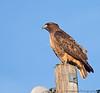 December 20, 2012 - Hawk(ing)