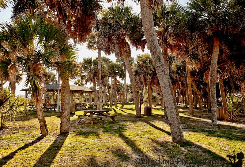 January 30, 2012 - Shadows at Edisto beach state park, SC