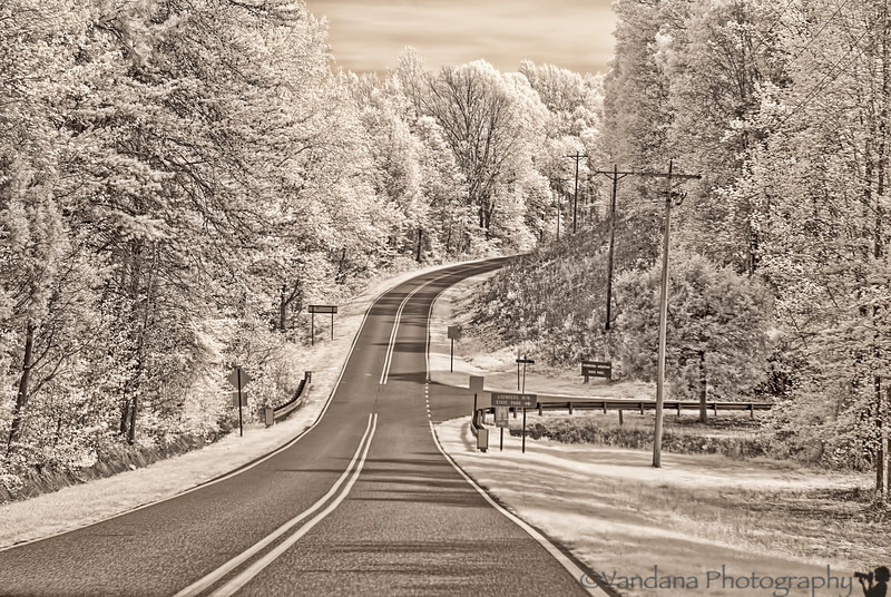 April 5, 2012 - the IR road, Crowders Mountain State Park, NC - photo taken with IR-converted Nikon D80 camera, pretty much SOOC.