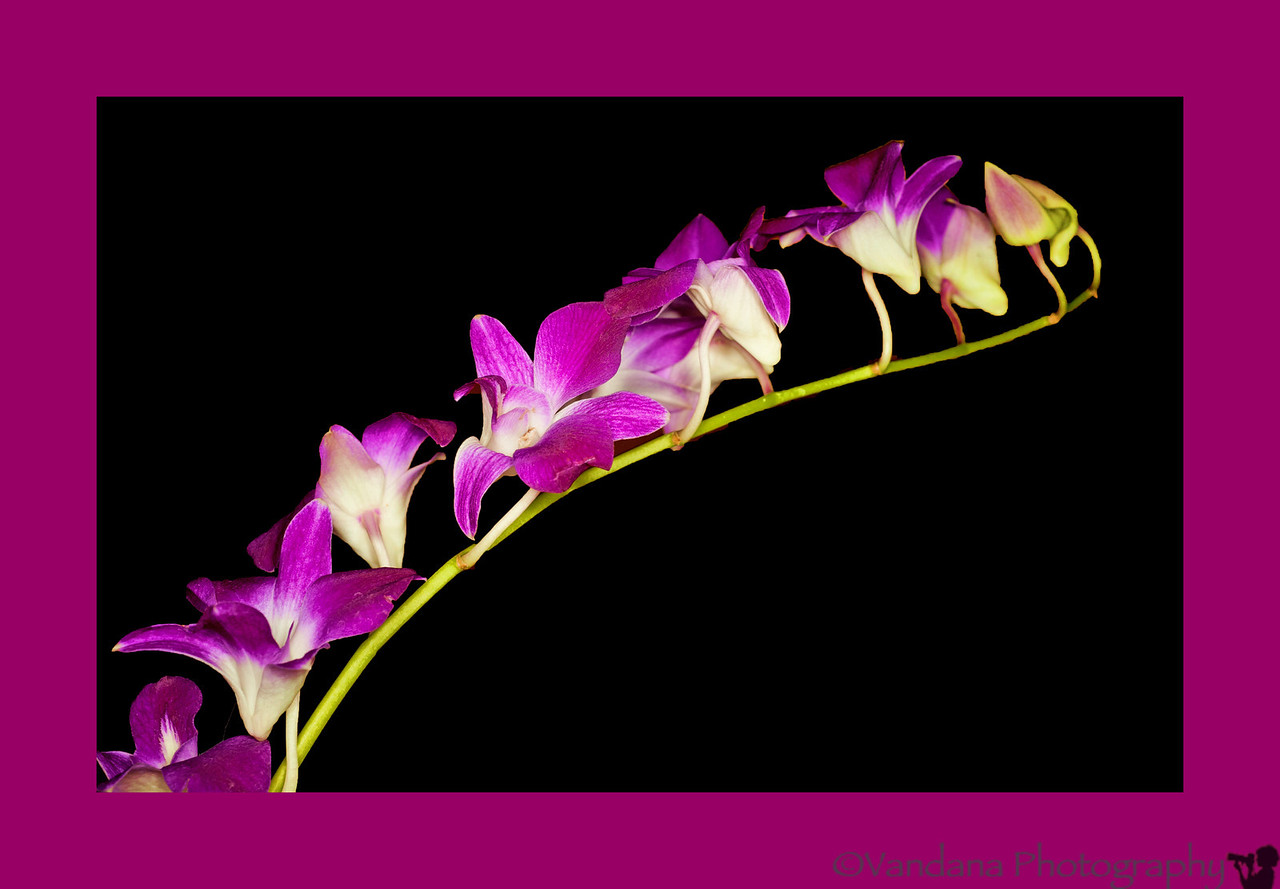 May 14, 2012 - Orchids