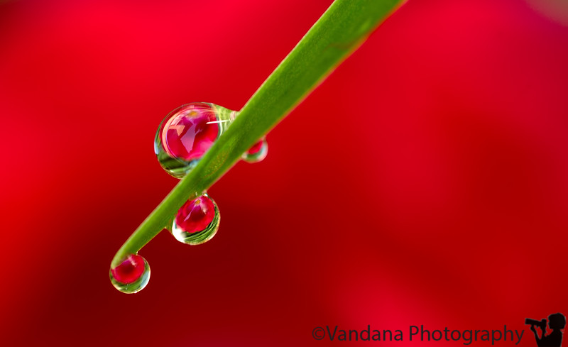 April 28, 2013 - a rose, some drops, and magic !