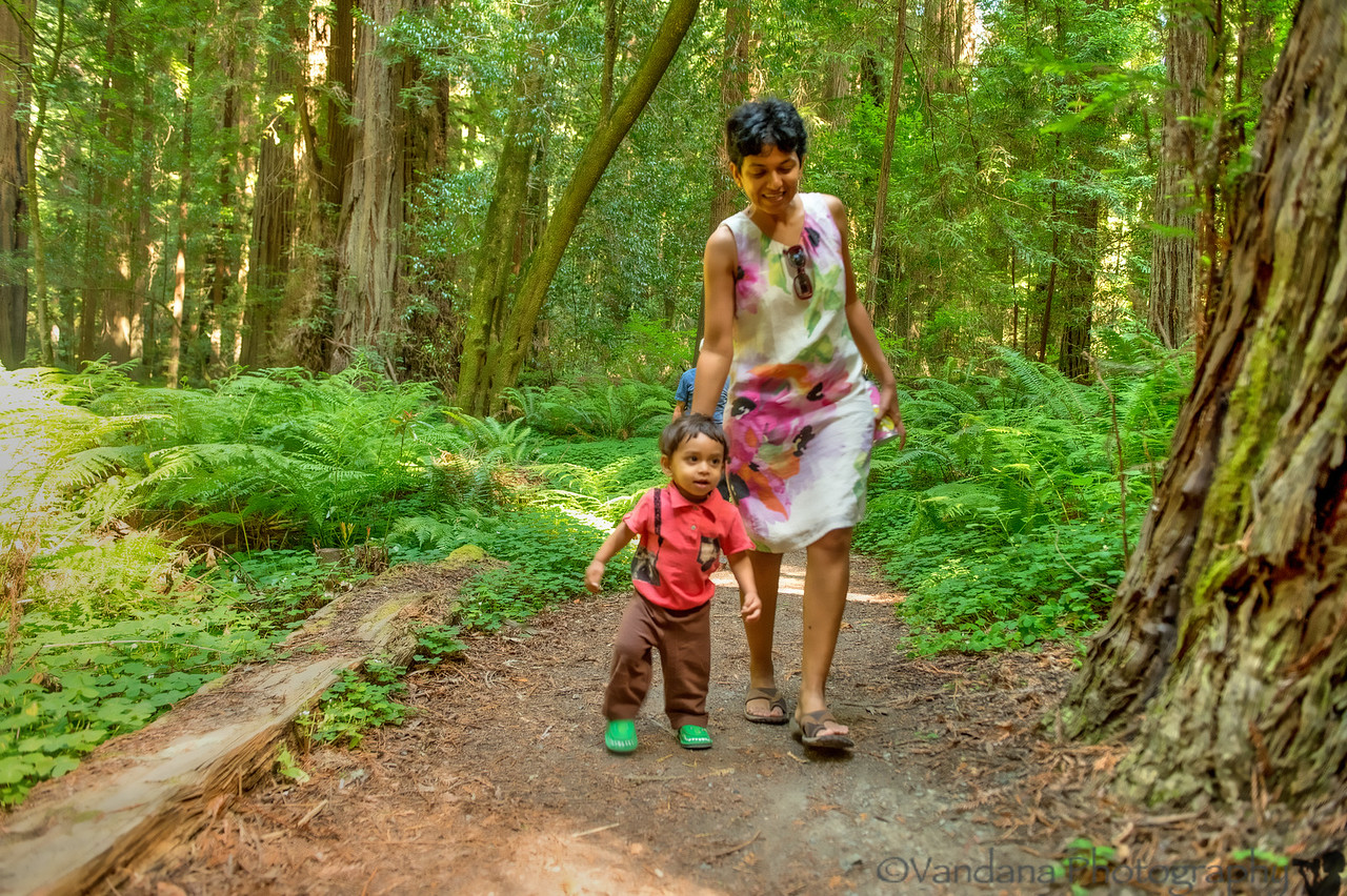 August 7, 2013 - Walk in the woods<br /> <br /> one from our Redwoods trip