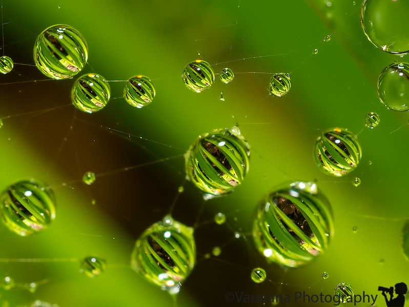 June 23, 2013 - Drop refractions over a cobweb