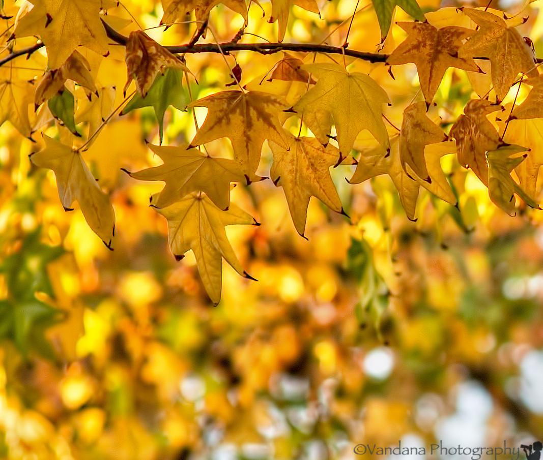 November 10, 2013 - the gold rush