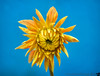 August 8, 2013 - Flower power