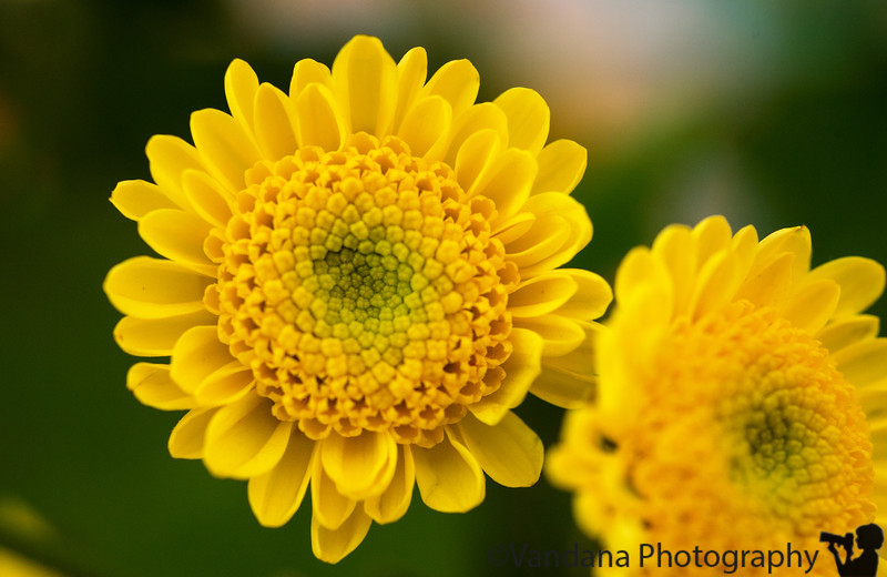 June 11, 2013 - bright yellows