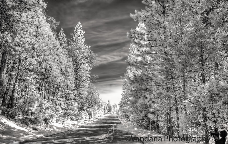 March 12, 2013 - The road ahead<br /> <br /> in Infrared, taken with IR-converted Nikon D80 camera, minimal post-processing. Liked how the green trees ( white in IR) merge with the white snow<br /> (remains white in IR, interesting !)