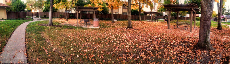 October 18, 2013 - an iphone panorama of fall in the neighborhood
