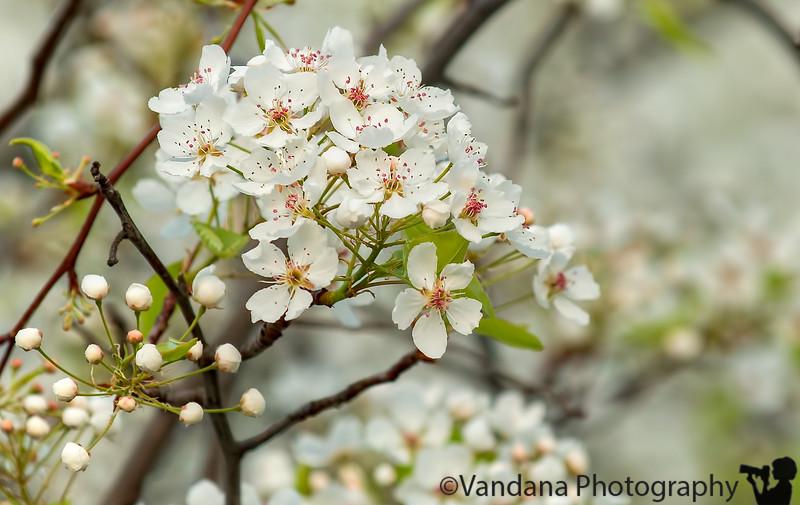 February 17, 2013 - Spring blossoms already ! I'm liking California !!